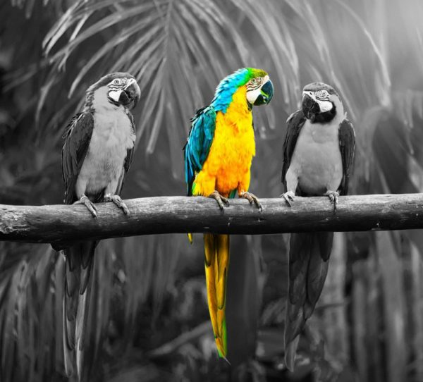 colour-matching-parrots